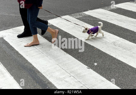 people with a dog on a zebra crossing - Stock Photo