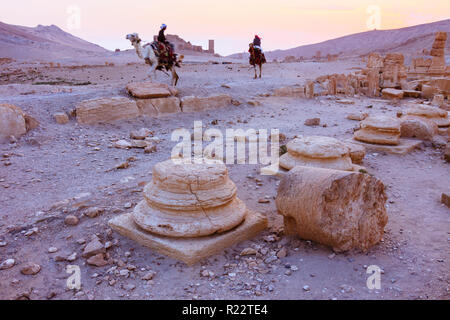 Palmyra, Homs Governorate, Syria - May 26th, 2009 : Bedouin men ride camels through the ruins of Palmyra at sunset. - Stock Photo