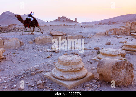 Palmyra, Homs Governorate, Syria - May 26th, 2009 :  A Bedouin rides a camel through the ruins of Palmyra at sunset. - Stock Photo