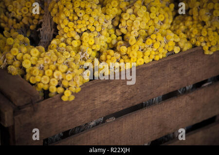 A rustic wooden crate full of dried yellow flowers - Stock Photo