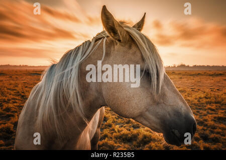 A horse poses for the camera with sunset in the background. - Stock Photo