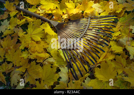 Old Metal Leaf Rake With Yellow Maple Leaves Autumn Scene - Stock Photo