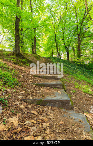 Staircase in the park going to the top covered with dry leaves - Stock Photo
