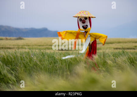 Scarecrow with yellow and red dress, as well as flower hat in field of barley on an island off Jeju, on a windy gray day - Stock Photo