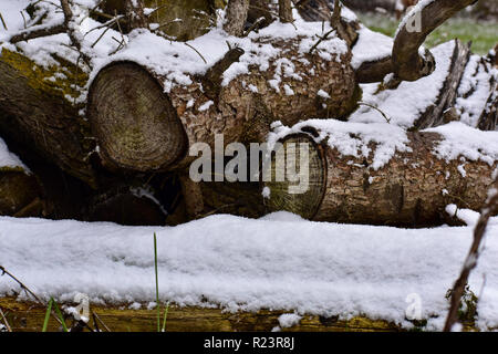 Wood pile stacked next to cedar log covered in snow. This photo was taken in the fall right after our first snowstorm here in Michigan. - Stock Photo