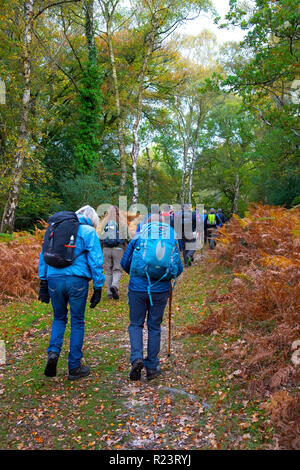 Group of walkers taking a guided walk in autumn through the New Forest National Park, Hampshire, UK, England - Stock Photo