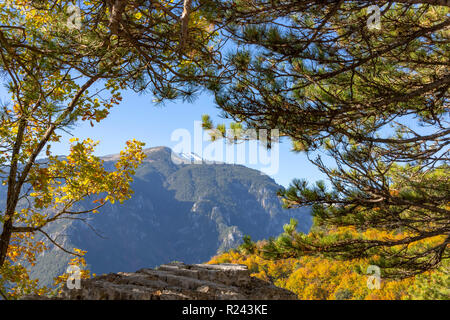 View of the snowy summit of Mount Olympus in the frame of the branches of trees with autumn foliage. Litochoro. Greece - Stock Photo