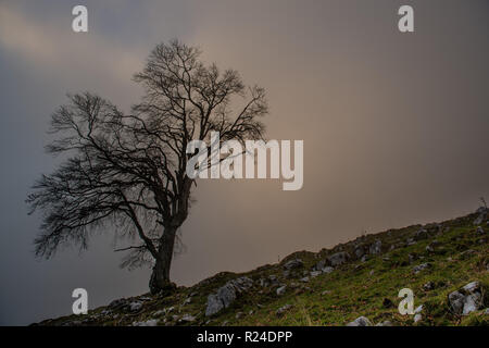 ancient trees immersed in the fog - Stock Photo