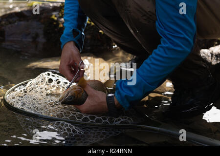 Fisherman removing fishing hook from fish with scissor - Stock Photo