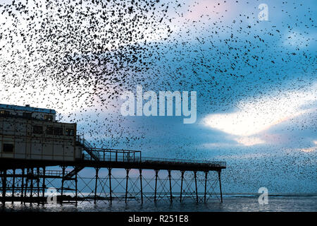 Aberystwyth Wales UK, 16th Nov 2018.  UK Weather: Tens  of thousands of starlings fill the sky as they perform their nightly balletic 'murmurations' before swooping down to roost noisily for the night on the forest  of cast iron legs underneath the Aberystwyth's Victorian seaside pier. Aberystwyth is one of the few urban roosts in the country and draws people from all over the UK to witness the spectacular nightly displays.  photo credit: Keith Morris / Alamy Live News - Stock Photo