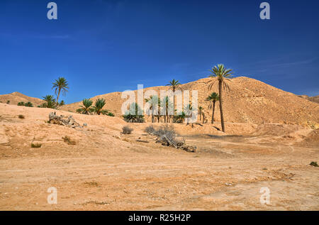 Palms in Sahara Desert in Tunisia, Africa, HDR - Stock Photo