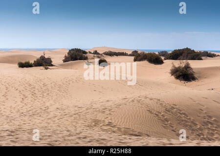 Coastal dunes in Maspalomas beach, Gran Canaria Island, Canary Islands, Spain. - Stock Photo