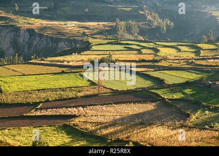 Beautiful Agricultural Fields in the Morning Sunlight, Colca Canyon or Valle del Colca in Arequipa Region of Peru - Stock Photo