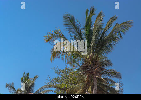 Detailed view of palm trees on the island of Mussulo, Luanda, Angola... - Stock Photo
