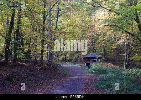 A wooden hut, a resting place during day hiking in the autumn forest at the foothills of the Hunsrück high forest in the countryside of Saarland. - Stock Photo