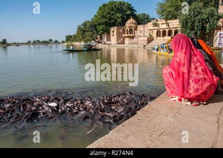 Hindu women feed the sacred catfish of Gadi Sagar Lake near Jaisalmer - Stock Photo