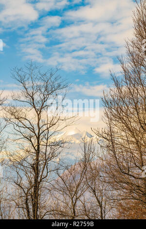 Dry forest with grey trees and orange leaves at piamonte district, Italy - Stock Photo