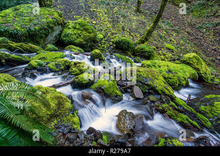 Mossy Rocks at Creek in Oregon's famous Columbia River Gorge. Pacific Northwest - Stock Photo