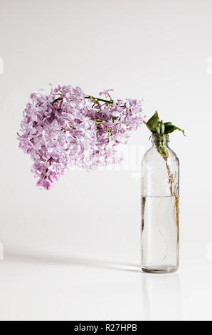 Branch of lilac in a glass bottle. Spring floral background in minimalist concept. - Stock Photo