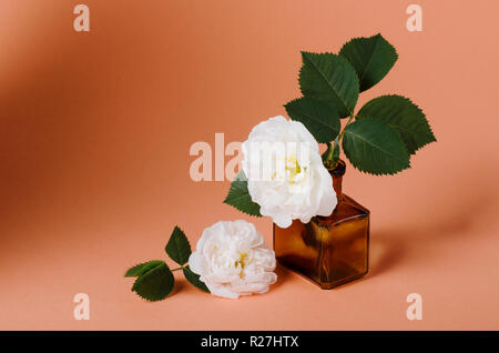 Gentle white spring roses in a old vintage bottle against romantic pink background. - Stock Photo