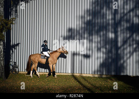 Stuttgart, Germany. 17th November 2018. A rider on the phone is on his way to the stables at the 34th International Horse Show in Stuttgart, the German Masters. The tournament runs from 14th to 18th November. Credit: Sebastian Gollnow/dpa/Alamy Live News - Stock Photo