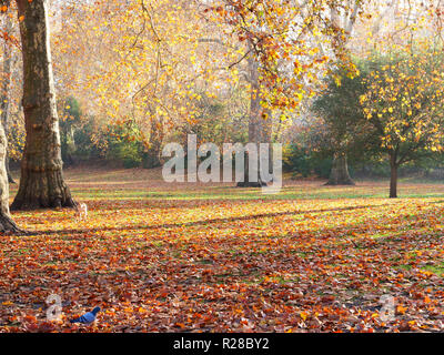 London, UK. 17th November, 2018. This weekend is an excellent opportunity to go out for a nice walk in any of the parks and open spaces of London, to enjoy the fresh, sunny weather and colourful autumn leaves. Credit: Joe Kuis / Alamy Live News - Stock Photo