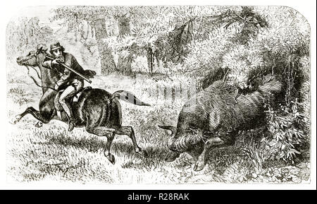 Old illustration depicting british hunter Charles Baldwin chased by furious buffalo. By Janet-Lange after Baldwin, publ. on le Tour du Monde, Paris, 1 - Stock Photo