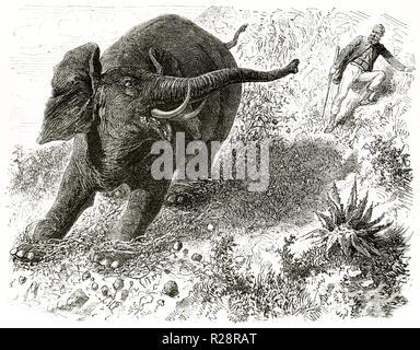 Old illustration depicting hunter Charles Baldwin chasing Elephant. By unidentified author, publ. on le Tour du Monde, Paris, 1863 - Stock Photo