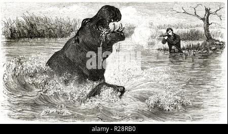 Old illustration depicting hunter Charles Baldwing hunting Hyppo. By Janet-Lange after Baldwin, publ. on le Tour du Monde, Paris, 1863 - Stock Photo