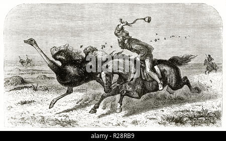 Old illustration depicting hunter Charles Baldwin hunting Ostrich. By unidentified author, publ. on le Tour du Monde, Paris, - Stock Photo