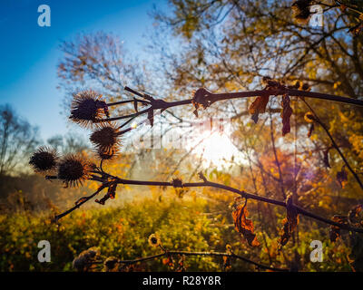 Close of up dried flowers during sunrise before a colorful background - Stock Photo