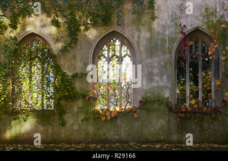 Perpendicular windows of the ruined church of St Dunstan in the East, in the city of London, UK - Stock Photo