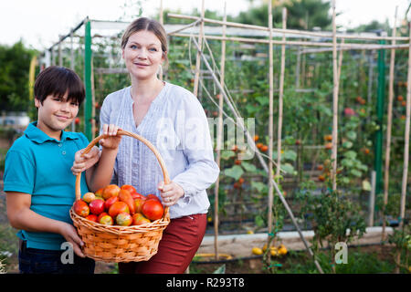 Young woman gardener with small  boy holding basket with tomatoes  in  garden - Stock Photo
