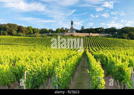 Vineyards and Niederwalddenkmal monument, Rudesheim, Rhineland-Palatinate, Germany - Stock Photo