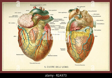 Vintage color table of anatomy, human heart with  anatomical descriptions in italian - Stock Photo