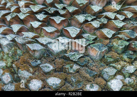 The texture of the outer part of the trunk of a palm tree. - Stock Photo