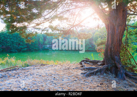 lonely tree on the edge of the forest on a hill - Stock Photo