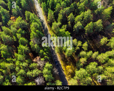 Beautiful road through evergreen pine forest on bright sunny day. Eco tourism and travel concept. Aerial drone virew - Stock Photo