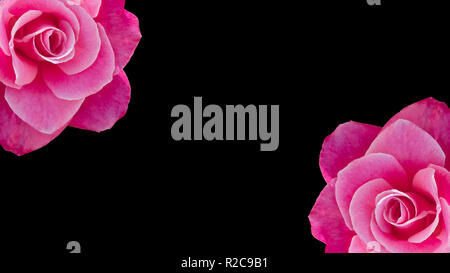 Two cropped pink roses banner or background with copy space, idea or concept for a romantic message, proposal, Valentine day - Stock Photo