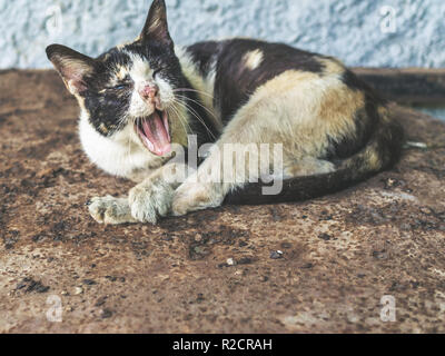Three colors homeless blind cat. Dirty cat yawning on rust ground. - Stock Photo