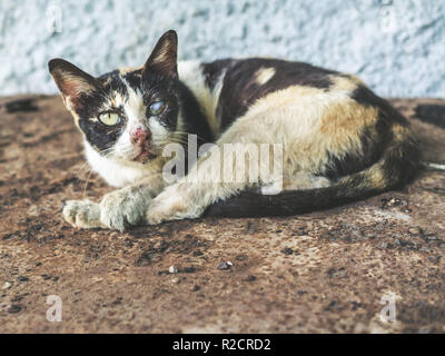 Three colors homeless blind cat. Dirty cat looking with one eye is sleeping on rust ground. - Stock Photo