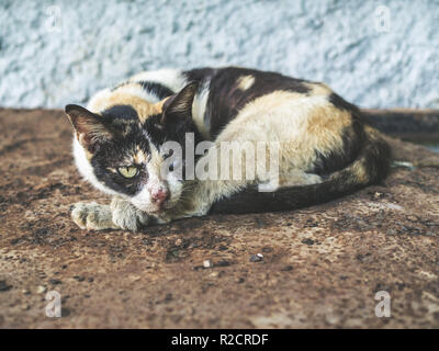 Three colors homeless blind cat. Dirty lonely cat looking with one eye is sleeping on rust ground. - Stock Photo