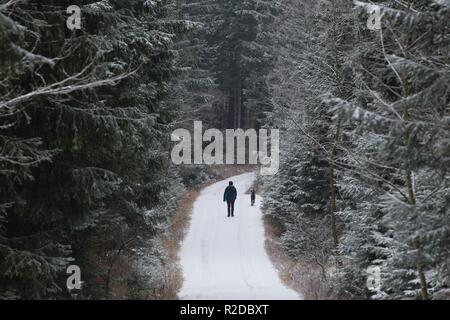 Altenberg, Germany. 19th Nov, 2018. A walker walks along a snow-covered hiking trail. Credit: Sebastian Kahnert/dpa-Zentralbild/ZB/dpa/Alamy Live News - Stock Photo