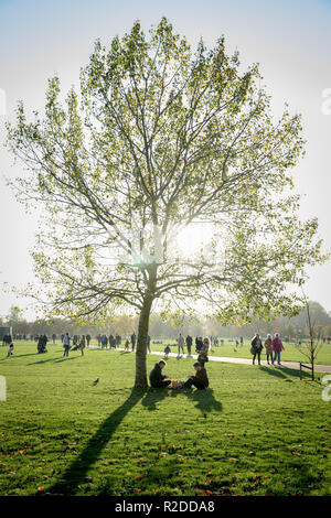 London, UK. 19th November, 2018. UK Weather: Sunny afternoon light in Hyde Park. Credit: Guy Corbishley/Alamy Live News - Stock Photo