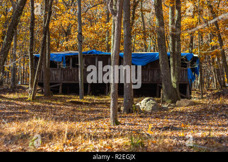 Abandoned cabin in forest with blue tarp on roof - Stock Photo