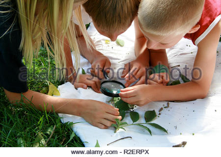 Children's views leaves with a magnifying glass - Stock Photo