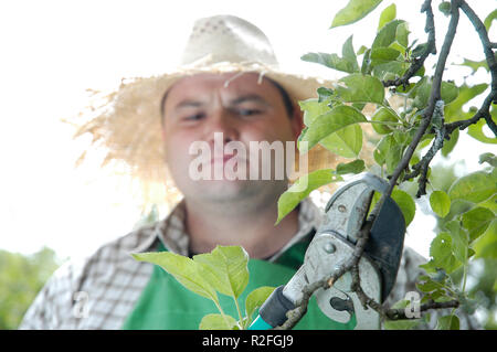 tree care - Stock Photo