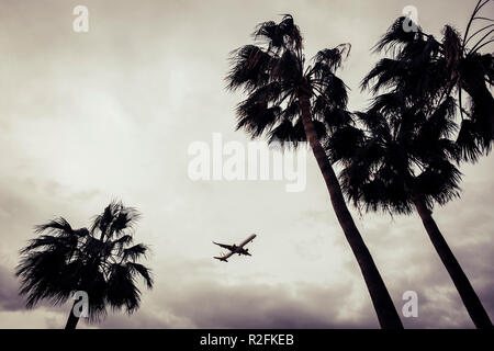 palms and fly departures and arrival in tropical place. - Stock Photo