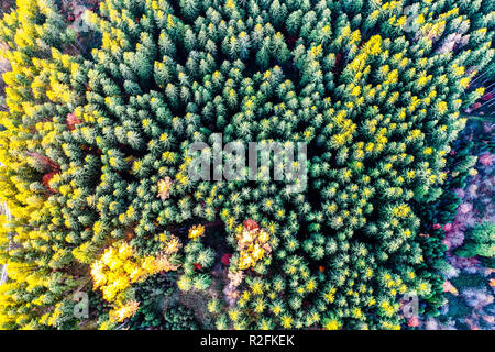 Autumn forest aerial drone view - Stock Photo