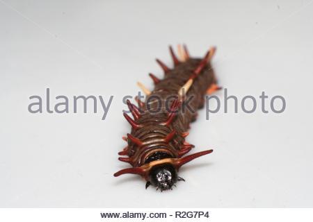 caterpillar 2 - Stock Photo